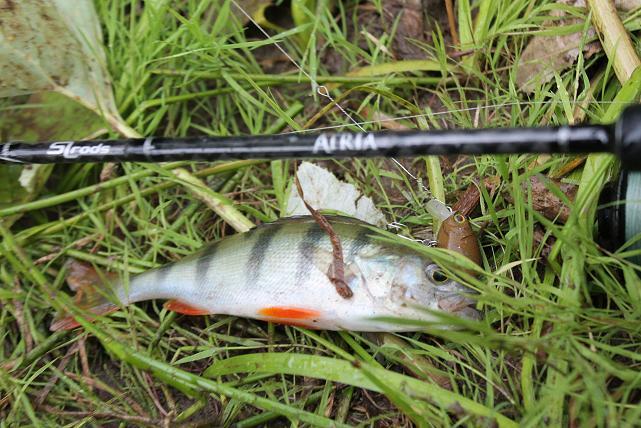 рыбалка как и где ловить головля